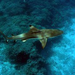 Акула напала на туриста біля узбережжя Пхукета