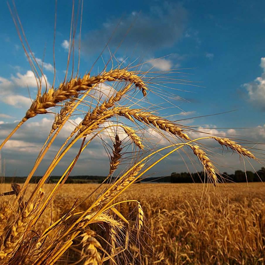 Погода на сьогодні: в Україні очікується спека до +35 градусів