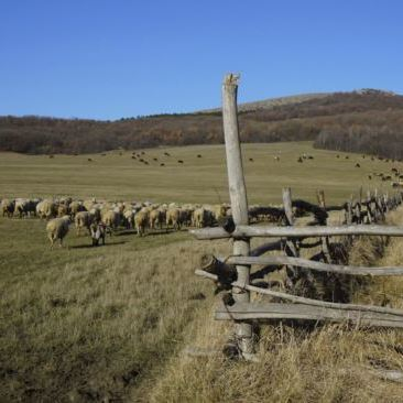 На Житомирщині скаржаться на фермера, який мучить овець голодом