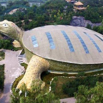 Біля китайського озера з'явилася гігантська черепаха (фото)