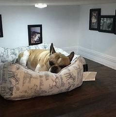 Світильник та сімейні фото:  користувач мережі зробив спальню для свого собаки (фото)
