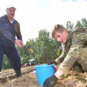 Аграрій Лукашенко зібрав небувалий урожай картоплі: фото, відео