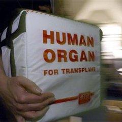 Стало відомо, скількі українців згодні віддати свої органи для трансплантації після смерті - опитування