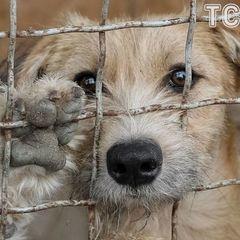 У Миколаєві планують «вбити» 5 тисяч собак