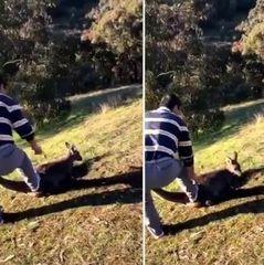 Австралійця арештували за жахливе вбивство кенгуру
