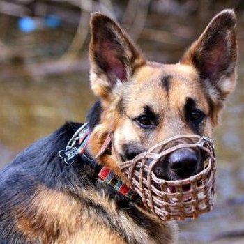 У Львові співробітники виконавчої служби не змогли вилучити у господаря собаку, який покалічив дитину