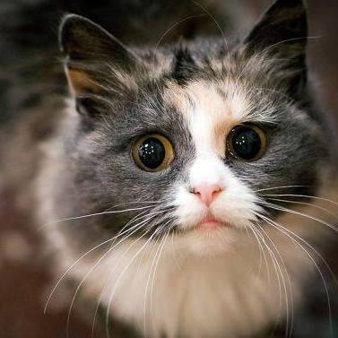 У Парижі жінка силою утримувала в однокімнатній квартирі 130 котів