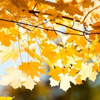 Якою буде погода в Україні в суботу, 9 вересня