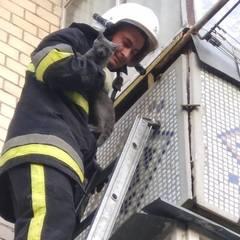 Як рятувальники допомогли кошеняті (фото)