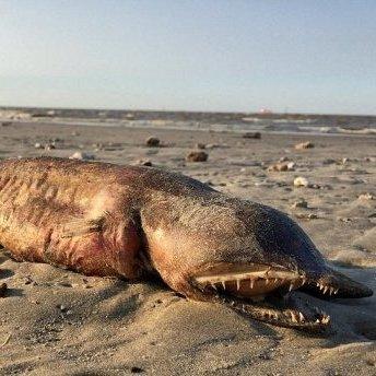 На берег США викинуло невідому загадкову істоту (фото)