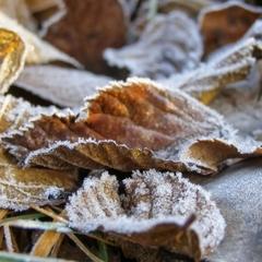 В жовтні на українців чекають заморозки та мокрий сніг, - синоптики