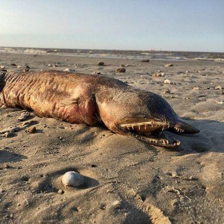 Американські вчені ідентифікували монстра, якого знайдено на пляжі Техасу (відео)