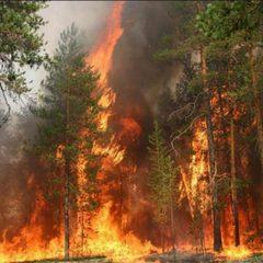У 4 областях попереджають про надзвичайну пожежну небезпеку