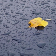 Сьогодні в Україні місцями пройдуть дощі з грозами, на півдні та сході буде спекотно (карта)