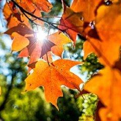 Прогноз погоди на 25 вересня: в Україну йде потепління