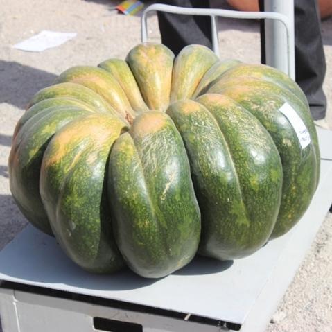 Український господар виростив овоч-гігант і отримав за це телевізор (фото)