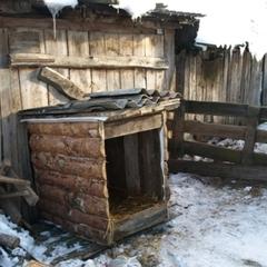 У Черкасах чоловіка прикували ланцюгами до собачої будки (відео)