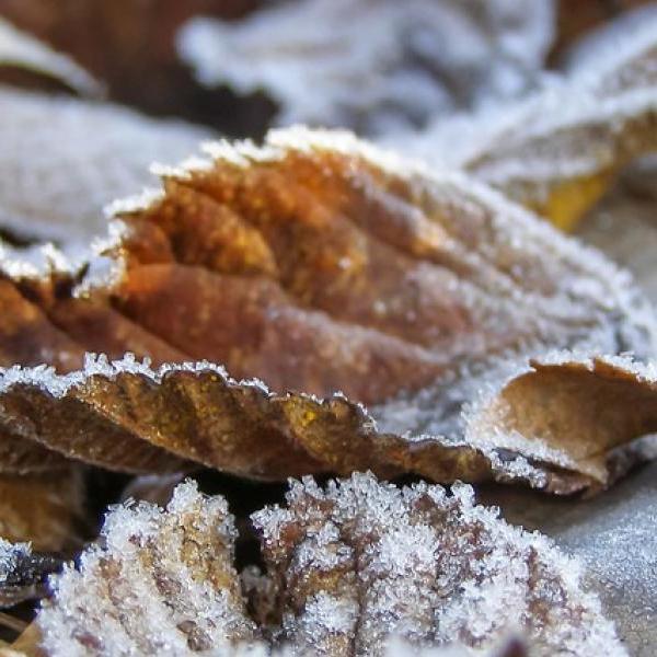 У найближчі дві ночі в деяких областях України будуть заморозки