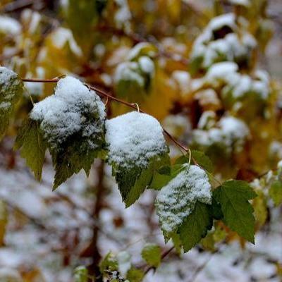 У другій половині жовтня синоптики обіцяють українцям перший сніг