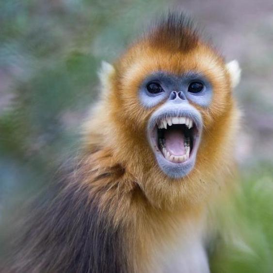 Стало відомо чому у харківському зоопарку мавпи відгризли чоловікові пальці й вухо