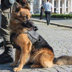Як на Закарпатті змагалися кінологи: фото собак