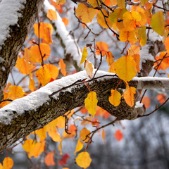 Мороз і сніг: що подарують українцям 2 місяці осені