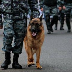 Чотирилапі в погонах: на Закарпатті обрали найкращого службового собаку України (фото)