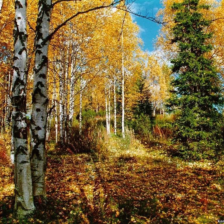 Найближчими днями на українців очікує незначне потепління: температура до +21