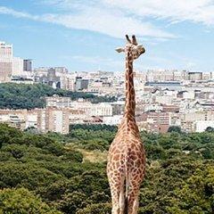 В одному із найвідоміших цирків України померла молода жирафа
