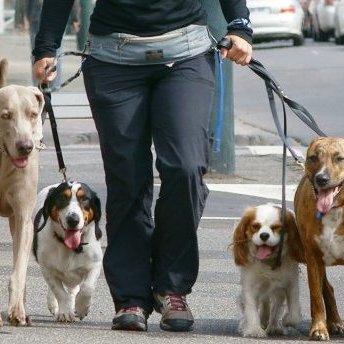 У Києві заборонили вигул собак на територіях дитсадків, шкіл, лікарень