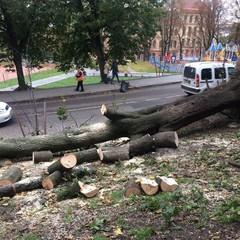 Потужний буревій у Львові повалив дерева та зривав дахи (фото, відео)