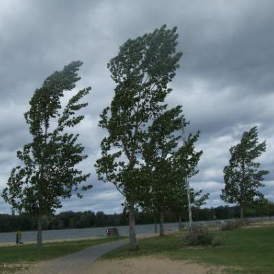 В Україні вітер може посилитись до критеріїв стихійного явища