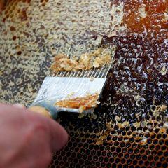 У зразках меду зі всього світу виявлено велику концентрацію інсектицидів