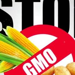 Депутати пропонують ввести державний контроль за ГМО-продукцією