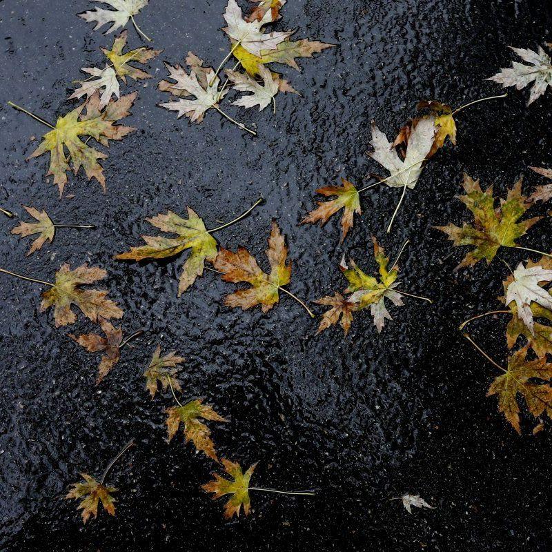 В Україні сьогодні місцями пройдуть дощі, на півдні та заході до +20° (карта)