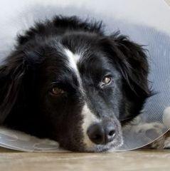 В Італії жінці оплатили лікарняне по догляду за собакою