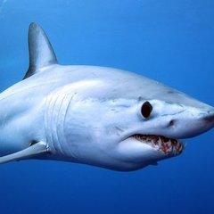 Жінка голими руками впіймала акулу та перенесла її в океан (відео)