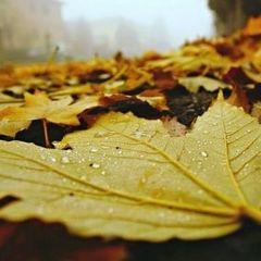 Міністр екології закликає українців компостувати опале листя і стерню