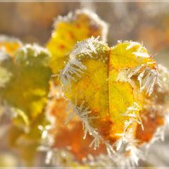 Протягом 3 днів в деяких областях України будуть заморозки