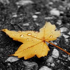 Під кінець тижня всю Україну охоплять дощі, - синоптик