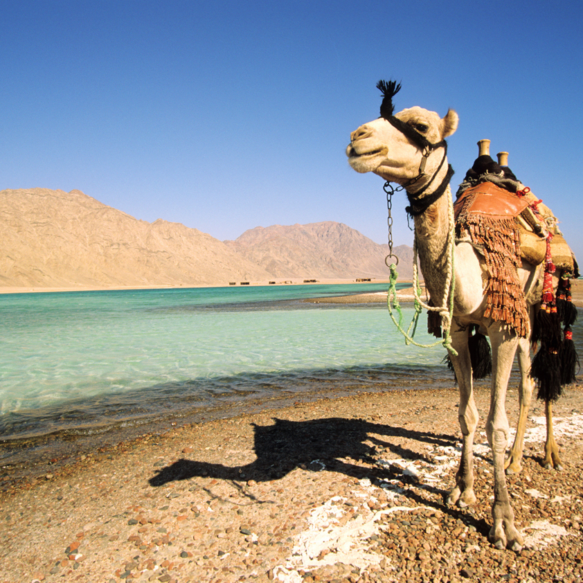 Із міжнародного аеропорту «Херсон» відкрився прямий рейс до Єгипту