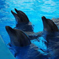 У Києві припинив роботу дельфінарій «Немо»