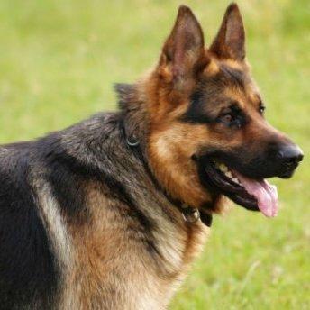 У Києві велика собака напала на 2-річну дитину