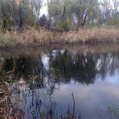 На Донеччині у річці знайшли тіло 25-річної дівчини