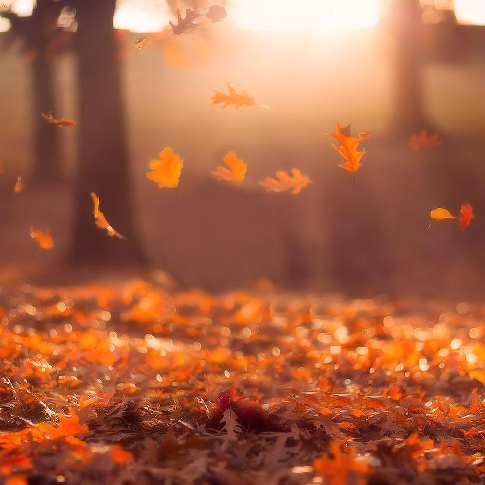 З 2 листопада погода налагодиться, - синоптик