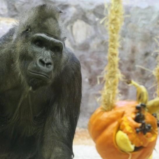 В Київському зоопарку відсвяткували Zoo-Halloween (відео)