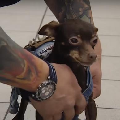 Власник викраденого собаки знайшов його через два роки пошуків