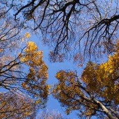 Прогноз погоди на 4 листопада: запізніле «бабине літо» потішить Україну
