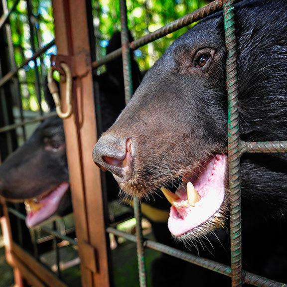 У Києві заборонили розміщення пересувних цирків з тваринами