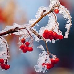 Сьогодні в Україні без опадів, на півдні температура до +12° (карта)